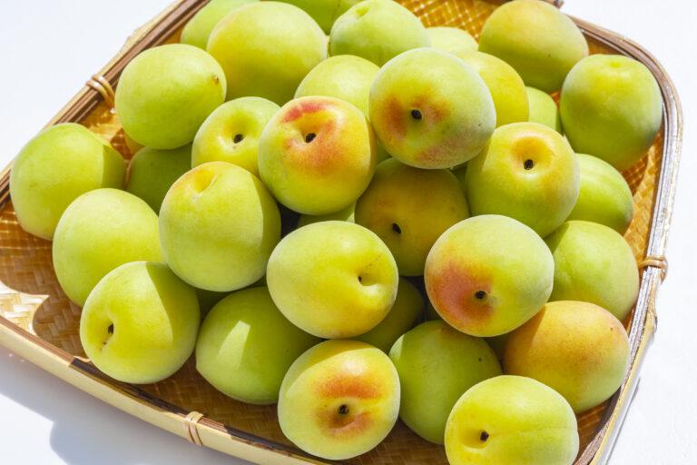 【ヒルナンデス】梅シロップの作り方レシピ!効能・効果や保存方法と美味しい梅の選び方は?