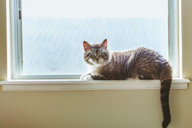 【動画あり】新宿の巨大猫はどこにある?見やすい方向や公開時間は?中国/韓国/台湾の3Dビジョン広告も調査